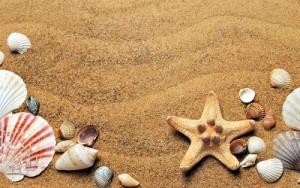 spiaggia-con-conglie-e-stelle-di-mare